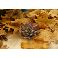 Brooch in the form of a succulent, made of polymer clay