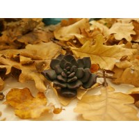 Large dark green succulent brooch
